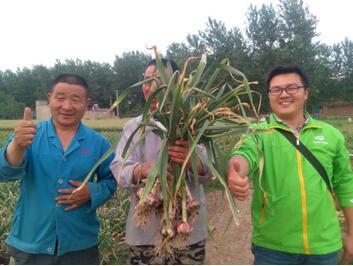 乡喜液体肥,创邳州大蒜产量新高度