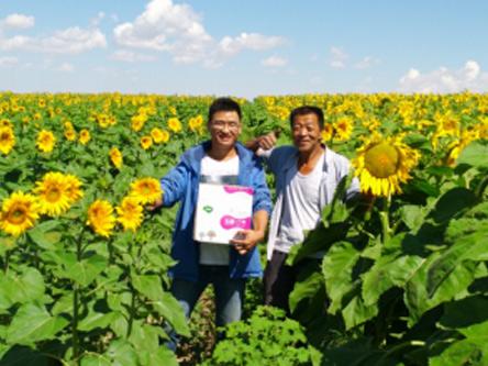 乡喜液体肥应用于内蒙古葵花的案例分析